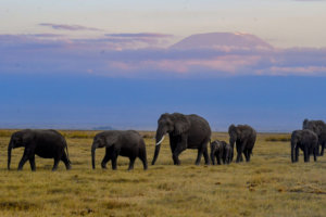 Kenya Had an Elephant 'Baby Boom' — and Now You Can Adopt One